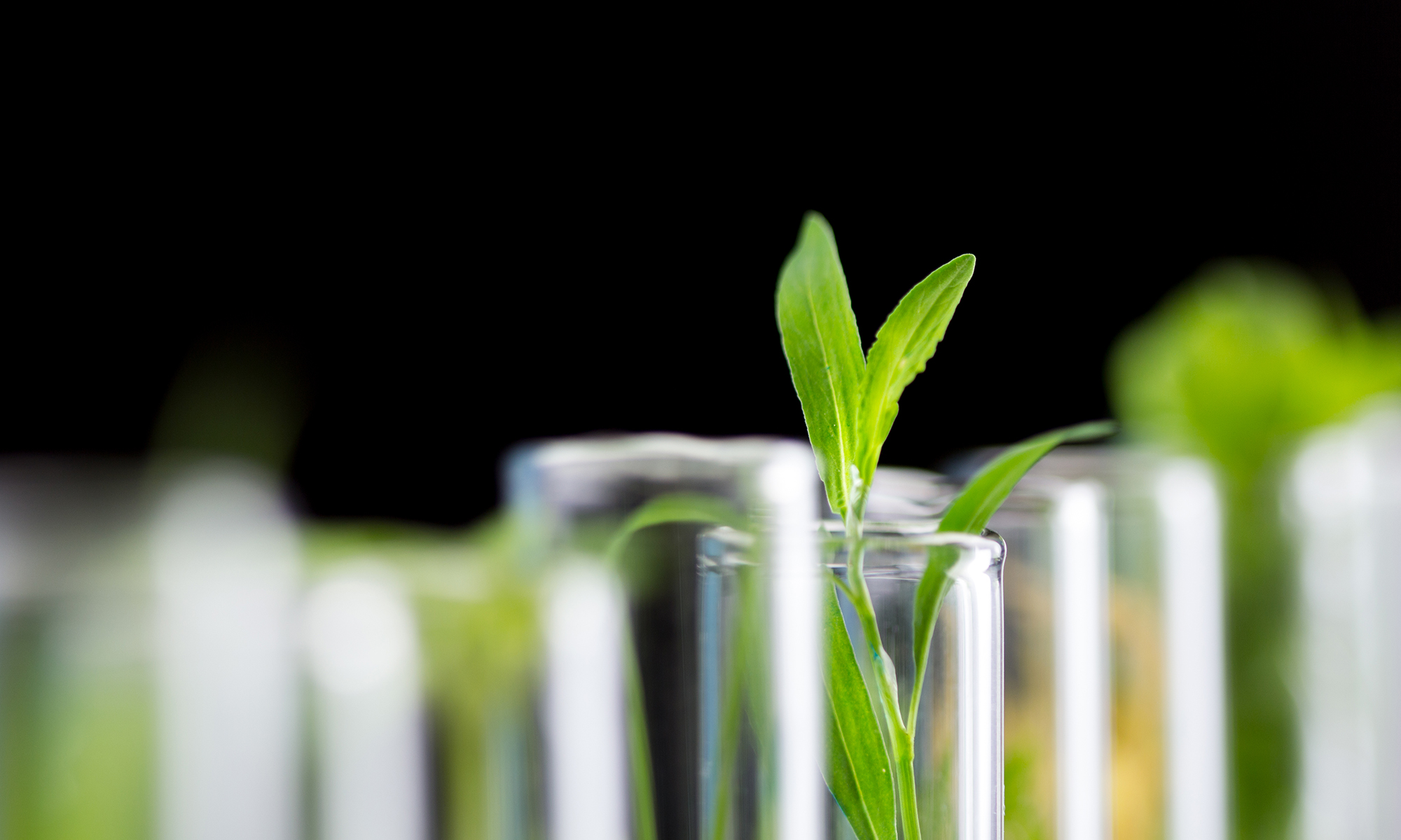 Project Cbd Launches Research Platform To Study Cbd