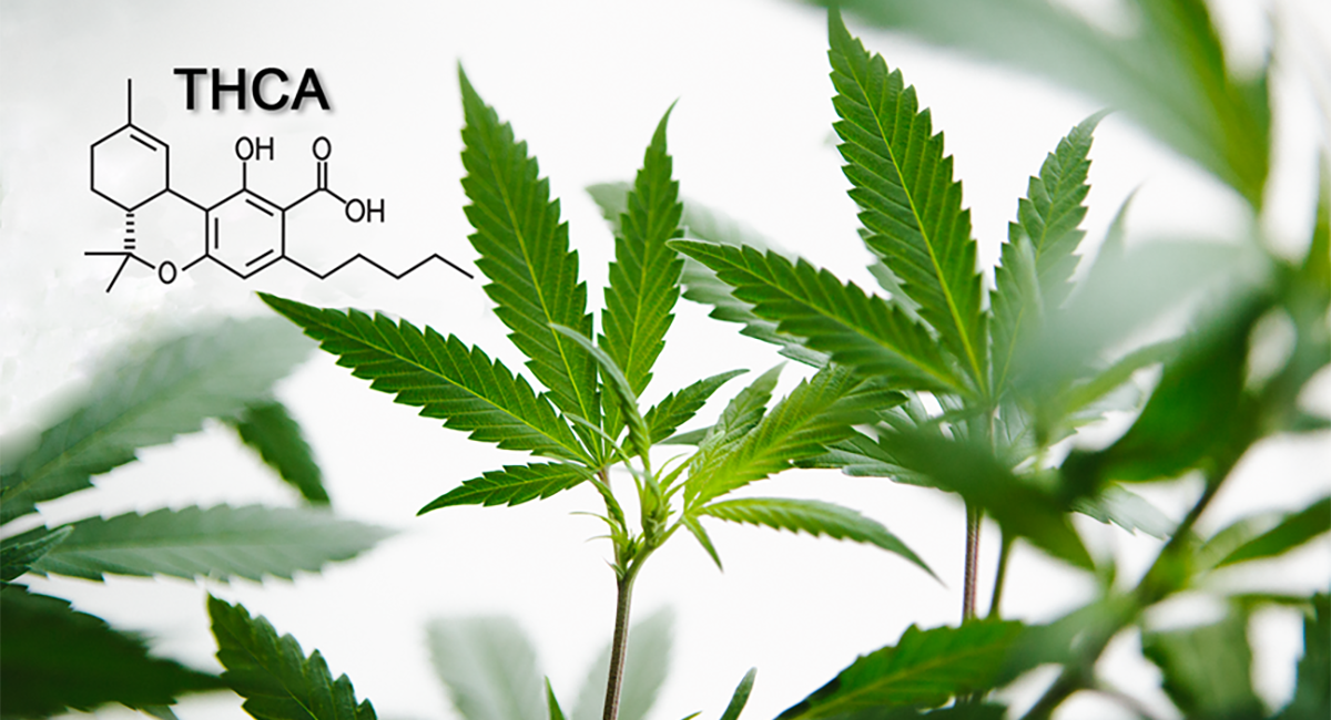 dosing thca  less is more