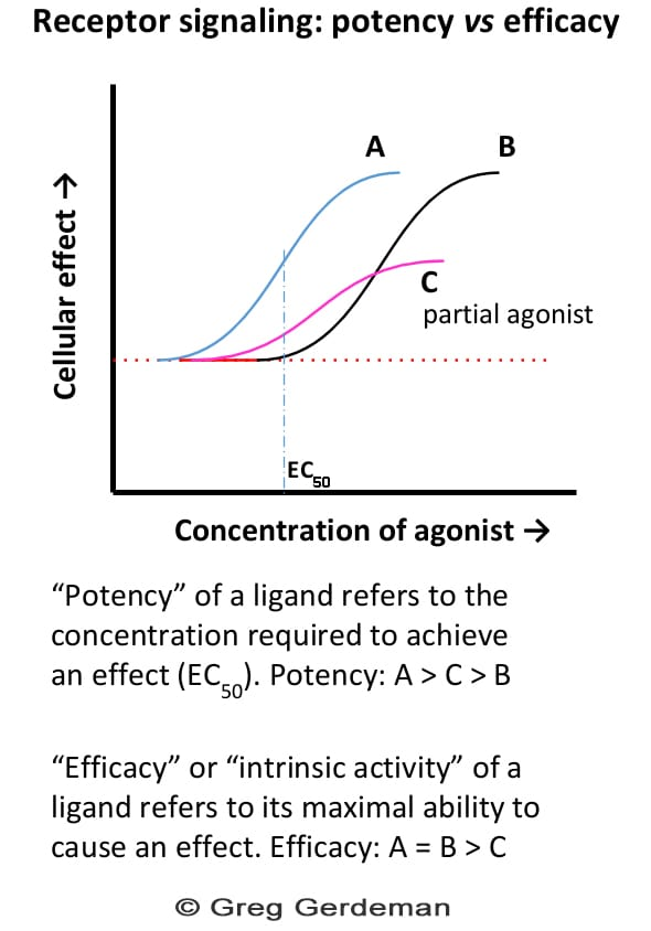 """A graph titled """"Receptor signaling: potentct versus efficancy"""". The x-axis is """"cellular effect"""", and the y-axis is """"concentration of agonist"""". Two s-curves, labeled A and B, follow basically the same shape, with B further along the y-axis than A. A third S curve is much lower allong the x-axis and labelled C and """"partial agonist"""". There is a caption: """"Potentcy of a ligand refers to the concentration required to acheive an effect. Potentcy of A>C>B. Efficacy, or intrinsic activity, or a ligand refers to its maximal ability to cause effect. Efficacy: A=B>C."""