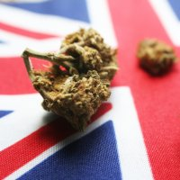 A close up of cannabis buds sitting on top of a Union Jack.