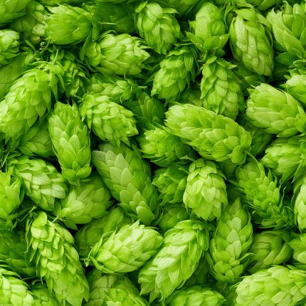 Flat lay of densely layered hops.