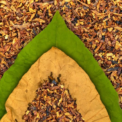 Dry and green tobacco leaf on cut tobacco background
