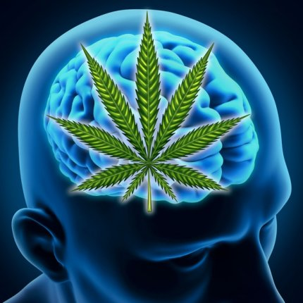 """book excerpt from """"Cannabinoids and the Brain"""" by Linda A Parker"""