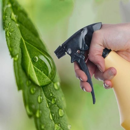 Lack of pesticides regulation in the cannabis industry