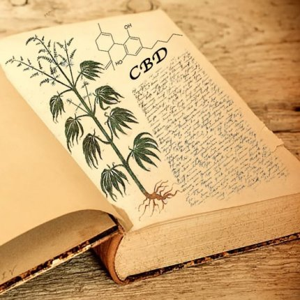 Book open with picture of Marijuana plant on page and CBD text
