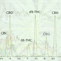 data distortions in cannabis research