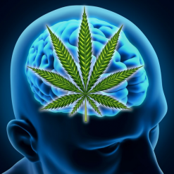 "book excerpt from ""Cannabinoids and the Brain"" by Linda A Parker"
