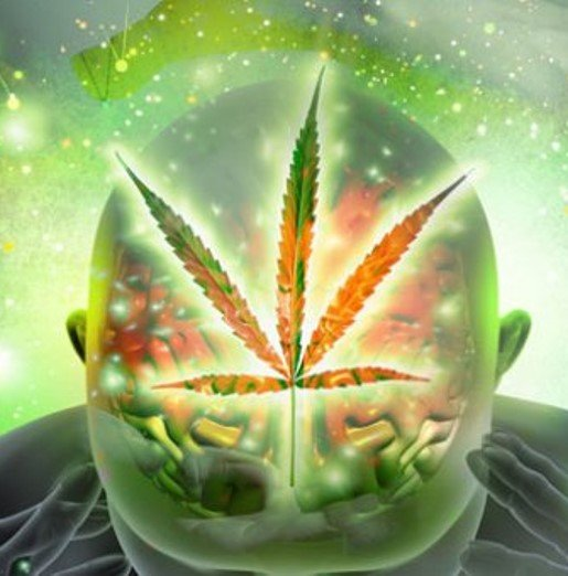 Colorful translucent view of a human head and a Marijuana Leaf
