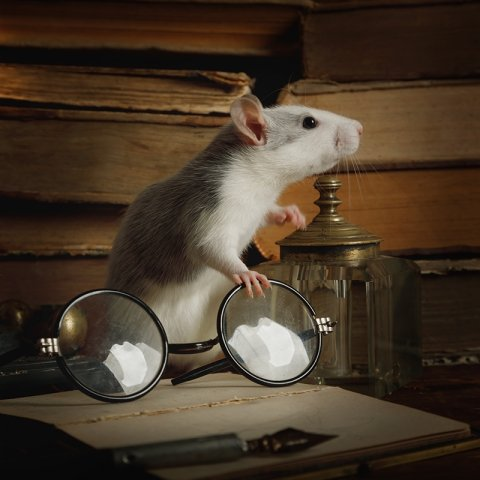 Mouse with books and glasses