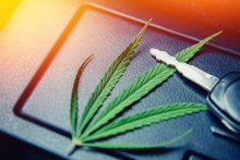 A cannabis leaf sits on the middle console of a car with a car key laid on top. There's a sun spot in the upper left hand corner of the photograph.