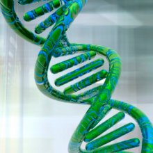 Sequencing the cannabis genome
