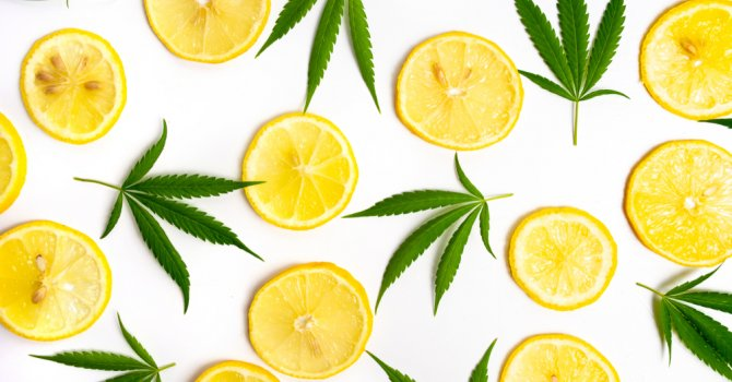 A pattern of lemon slices and cannabis leaves on a white background.