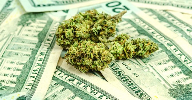 Securing local and state licenses to cultivate cannabis is costly