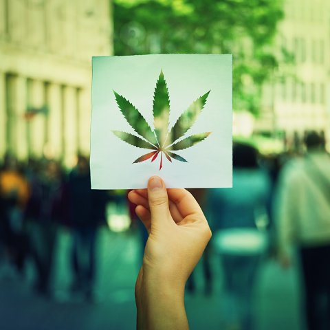 marijuana leaf cutout against crowd