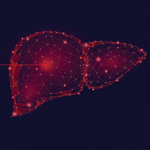 black and red drawing of the liver