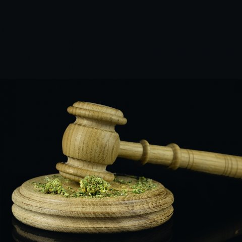 Gavel and cannabis on black background
