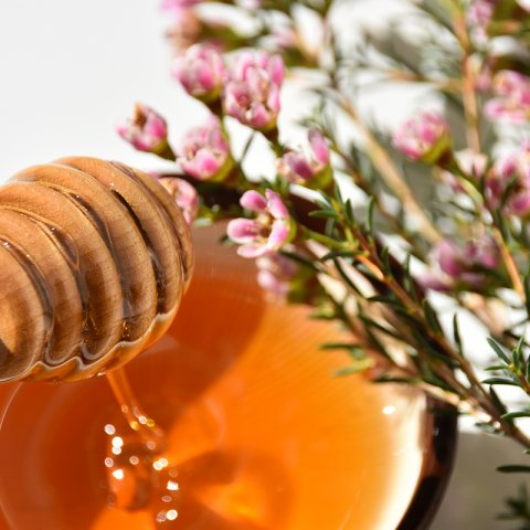 Photograph of a honey dipper dripping honey into a ceramic bowl. Manuka flowers are laid over the  bowl.